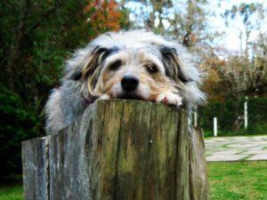 Hundar och ekonomi