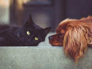 Ohyra som kan drabba hunden