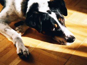 Aktivera hunden rätt